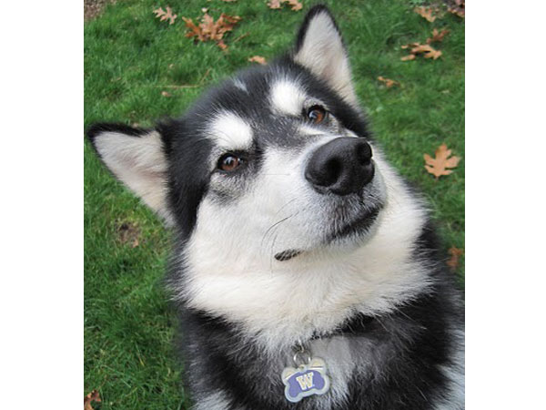 """Once again this year the Husky Neighborhood Interns (4 students) will be out in our community. They will be delivering """"The Bark"""", an intern developed document, to inform students and […]"""